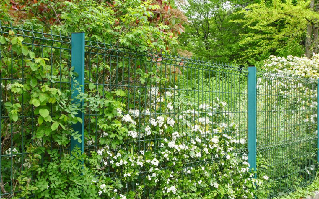 Il était une fois des arbres, des voisins et des clôtures